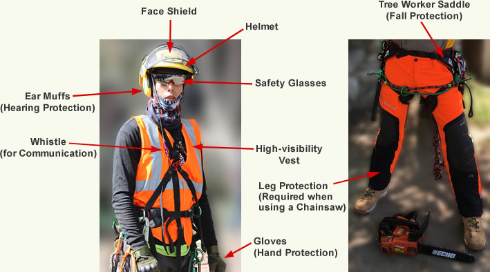 Illustration of personal tree work safety equipment.